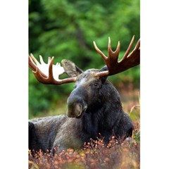 Majestic Moose Notebook