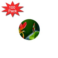Lily 1 1  Mini Button (100 Pack)