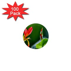 Lily 1 1  Mini Button Magnet (100 Pack)