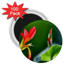 Lily 1 2.25  Button Magnet (100 pack)