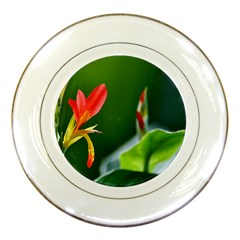 Lily 1 Porcelain Display Plate