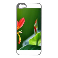 Lily 1 Apple Iphone 5 Case (silver)