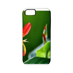 Lily 1 Apple Iphone 5 Classic Hardshell Case (pc+silicone)