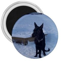 Snowy Gsd 3  Button Magnet