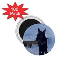 Snowy Gsd 1 75  Button Magnet (100 Pack)