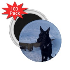 Snowy Gsd 2.25  Button Magnet (100 pack)