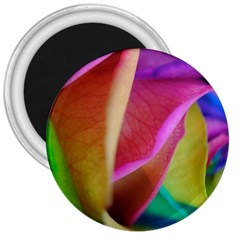 Rainbow Roses 16 3  Button Magnet