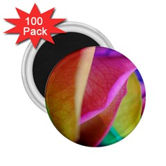Rainbow Roses 16 2 25  Button Magnet (100 Pack)