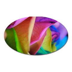 Rainbow Roses 16 Magnet (oval)