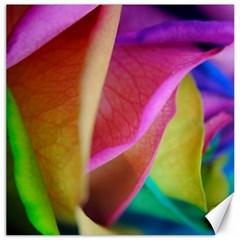 Rainbow Roses 16 Canvas 20  X 20  (unframed)