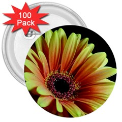 Yellow Orange Gerbera Daisy 3  Button (100 Pack)
