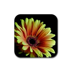Yellow Orange Gerbera Daisy Drink Coasters 4 Pack (Square)