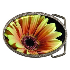 Yellow Orange Gerbera Daisy Belt Buckle (oval)