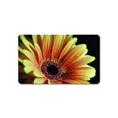Yellow Orange Gerbera Daisy Magnet (Name Card)