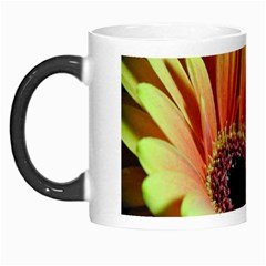 Yellow Orange Gerbera Daisy Morph Mug