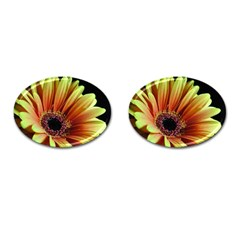 Yellow Orange Gerbera Daisy Cufflinks (Oval)