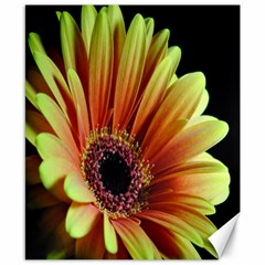 Yellow Orange Gerbera Daisy Canvas 8  x 10  (Unframed)