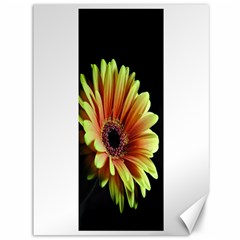 Yellow Orange Gerbera Daisy Canvas 36  x 48  (Unframed)