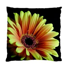 Yellow Orange Gerbera Daisy Cushion Case (two Sided)