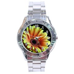 Yellow Orange Gerbera Daisy Stainless Steel Watch