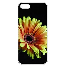 Yellow Orange Gerbera Daisy Apple Iphone 5 Seamless Case (white)