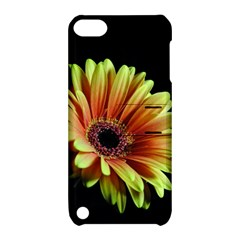 Yellow Orange Gerbera Daisy Apple Ipod Touch 5 Hardshell Case With Stand