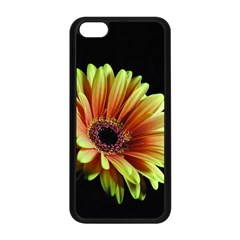 Yellow Orange Gerbera Daisy Apple iPhone 5C Seamless Case (Black)