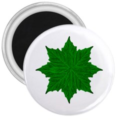 Decorative Ornament Isolated Plants 3  Button Magnet