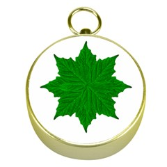 Decorative Ornament Isolated Plants Gold Compass
