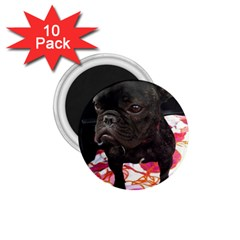 French Bulldog Sitting 1.75  Button Magnet (10 pack)