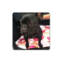 French Bulldog Sitting Magnet (square)