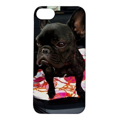 French Bulldog Sitting Apple iPhone 5S Hardshell Case