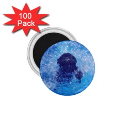 French Bulldog Swimming 1.75  Button Magnet (100 pack)