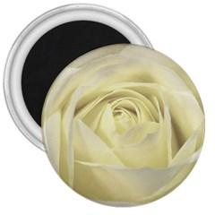 Cream Rose 3  Button Magnet