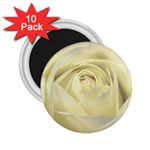 Cream Rose 2.25  Button Magnet (10 pack) Front