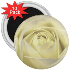 Cream Rose 3  Button Magnet (10 pack)