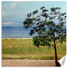 Sea Of Galilee Canvas 16  x 16  (Unframed)