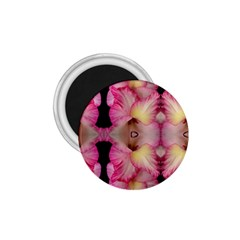 Pink Gladiolus Flowers 1 75  Button Magnet