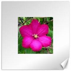 Clem Pink Canvas 16  x 16  (Unframed)