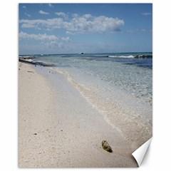 Seashell on Caribbean Beach Canvas 11  x 14  (Unframed)