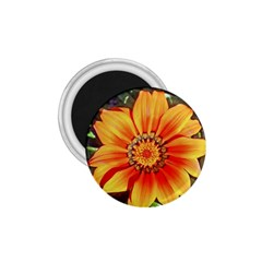 Flower In A Parking Lot 1 75  Button Magnet