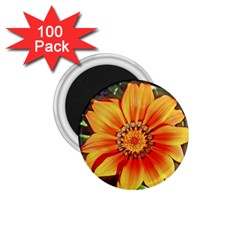 Flower In A Parking Lot 1.75  Button Magnet (100 pack)