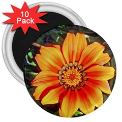 Flower In A Parking Lot 3  Button Magnet (10 pack)