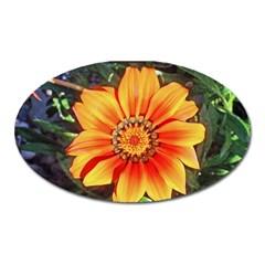 Flower In A Parking Lot Magnet (oval)