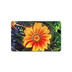 Flower In A Parking Lot Magnet (name Card)