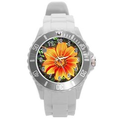 Flower In A Parking Lot Plastic Sport Watch (large)