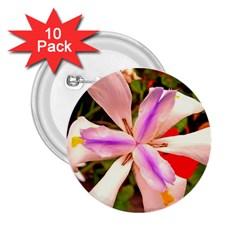 African Iris 2.25  Button (10 pack)