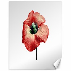 Your Flower Perfume Canvas 12  x 16  (Unframed)