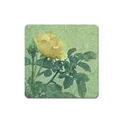 Yellow Rose Vintage Style  Magnet (square)
