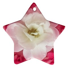White Rose With Pink Leaves Around  Star Ornament